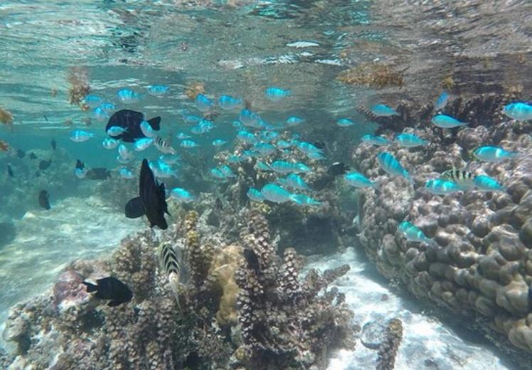 jardin de coral de taha'a