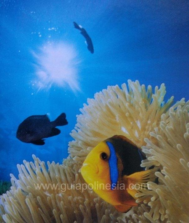 peces de polinesia